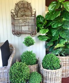 •  { B A S K E T }  We managed to find a few more baskets and have uploaded them to our online store! If you missed out last time, don't dawdle, they never last long! #haroldsfinishingtouches #haroldshome #toowoomba #home #myhome #decor #design #decorating #interior #interiordesign #verandah #baskets #rattan #love #luxe #style #styling #fiddleleaffig
