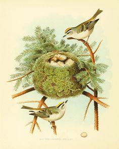 Bird nest art antiqu