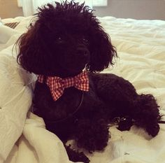Happy Dog and Cat Lovely Retro Gingham Check Red Bow tie Collar :) Love Factory By Rie Miyamoto on Etsy, $15.00