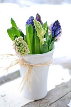 The fragrance of hyacinth, whether cut from the garden or forced indoors, will make you feel like spring, even when it's snowy.