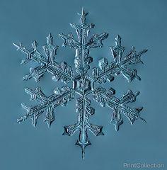 Print Collection - Stellar Dendrite Snowflake 002.03.24.2014