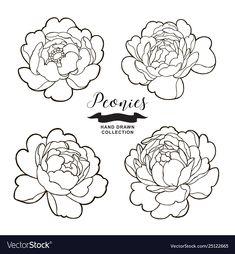 Peony flowers outlines hand drawn flowers vector image on VectorStock Flower Line Drawings, Flower Drawing Tutorials, Outline Drawings, Simple Flower Drawing, Peony Drawing, Peony Painting, Drawing Step, Peonies Wallpaper, Peonies And Hydrangeas