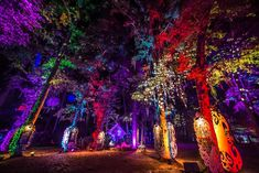 Suwannee Hulaween in Florida used art and environmental design to connect with fans. For large-scale music festivals—the kind that draw thousands of people to campgrounds in rural areas—programming isnt limited to what happens on stage. Forest Light, Electric Forest, Electric Daisy, Magical Forest, Event Lighting, Lighting Design, Trance, Outside Lands, Live Oak Trees