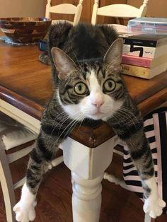 On m' a dit de me mettre a table !