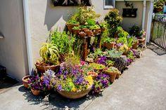 Beautiful potted garden | Garden Apothecary