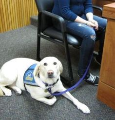 U.S. Courthouses Going To The Dogs  ... from PetsLady.com ... The FUN site for Animal Lovers