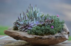 Succulents in wooden container