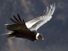 Fauna argentina: Pájaros argentinos. - Taringa!