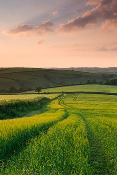 Summer, fields, trails, walk, outdoors, nature, sun, grass