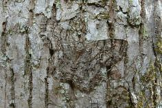Unbelievable Animal Camouflages (15 photos)