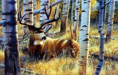 Artist Cynthie Fisher Whitetail Buck Deer Picture Afternoon Siesta   WildlifePrints.com
