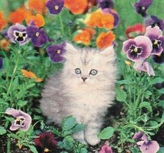 Cat and flowers (132 pieces)