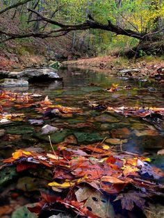 Streams In Autumn <3