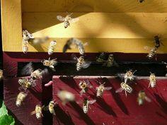 Mézelő Méhek, Méh, Kaptár, Méz