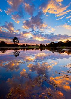 photo by Daryl Jones - Sippy Downs lake, Sunshine Coast, Australia