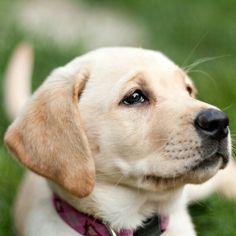 Pretty dog