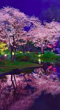 Goodnight from Tokyo ? impressionist photo: Midori on PhotoExtract Beautiful World, Beautiful Images, Beautiful Flowers, Pretty Pictures, Cool Photos, Parcs, Ikebana, Belle Photo, Amazing Nature