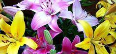 Buy Best Flowers