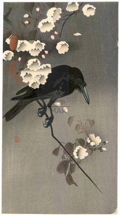"yama-bato: "" Crow on a flowering cherry branch (title not original) Shoson = Ohara Shoson = Koson (1877-1945) ca. 1900 Meiji (1868-1912) """