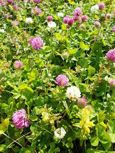 Beautiful flowers at Poiana Brasov, Romania