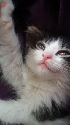 ❧ cute kitties,adorables chatons ❧