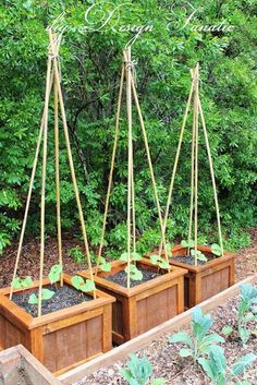 How to grow beans  I planted 4 pole beans in each planter box. ||  LOVE!!! ESPECIALLY FOR SMALL SPACES! ♥A