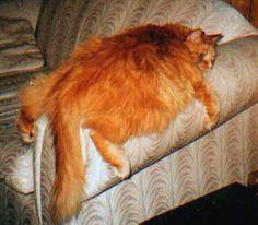 I love this sofa....