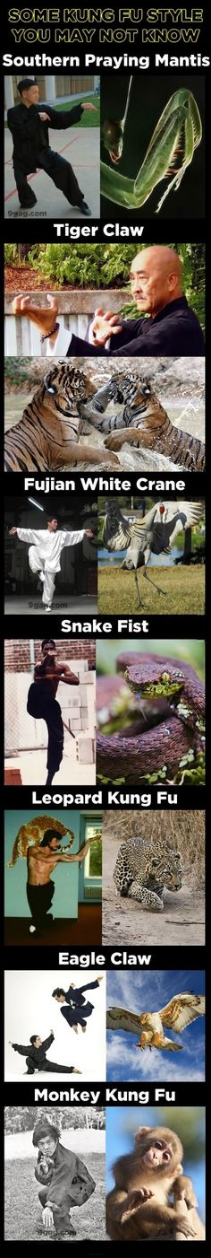 Seven Kung Fu style inspired by animals