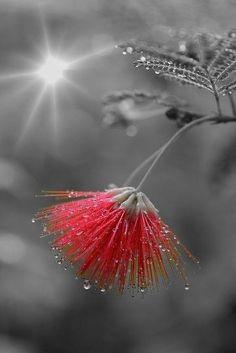 Splash of Red ❥ڿڰۣ-- […] ●♆●❁ڿڰۣ❁ ஜℓvஜ ♡❃∘✤ ॐ♥..⭐..▾๑ ♡༺✿ ☾♡·✳︎· ❀‿ ❀♥❃.~*~. TH 4th FAB 2016!!!.~*~.❃∘❃ ✤ॐ ❦♥..⭐.♢∘❃♦♡❊** Have a Nice Day!**❊ღ ༺✿♡^^❥•*`*•❥ ♥♫ La-la-la Bonne vie ♪ ♥ ᘡlvᘡ❁ڿڰۣ❁●♆●