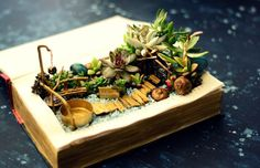 Picture of DIY Book Planter Succulent Fairy Garden