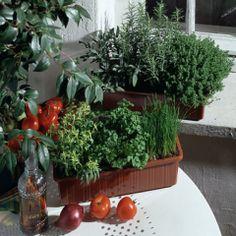 Aménager ses jardinières de plantes aromatiques : jardinerie Truffaut conseils Plantes du potager et fruitiers pour balcons et terrasses Tru...