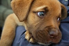 How To Tell If Your Pet Has Separation Anxiety ... Pet separation anxiety is a serious problem that can cause injury to your pet and damage to your home. Keep reading to learn what causes separation anxiety, and some of the symptoms to look out for. ... #pets #petcaretips #animals ... PetsLady.com