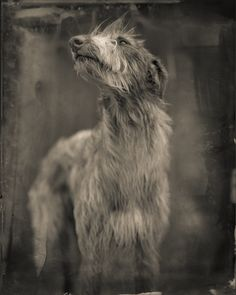 """Bog Dog"". Keith Carter  