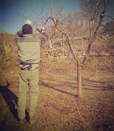 Winter busy days  pruning in the orchard.  #poderedipomaio #thinkgreendrinkred