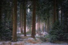 The first snow by Saskia Dingemans on 500px