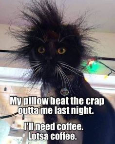 What a night! Funny Cat Memes, Funny Cats, Funny Animals, Cute Animals, Funny Quotes, Funny Humor, Coffee Quotes, Coffee Humor, Funny Shirts Women