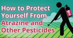Atrazine is the second most commonly used herbicide in the U.S., but is banned…