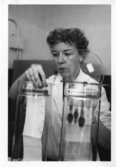 Mary Alice McWhinnie, a professor of biology at DePaul University and an authority on krill, was the first American women to be the chief scientist at an Antarctic research station.