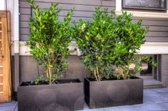 Historic Home Portland Landscaping - traditional - exterior - portland - by Paradise Restored Landscaping & Exterior Design