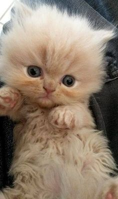 So cute by Love Meow