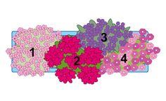 Pflanzidee Blumenkasten bunte Blütengesellschaft