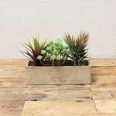 "Shelf Ready Succulent Garden   dotandbo.com $40 Dimensions: 9.5"" W x 3.5"" D x 7.5"" H 3-4 weeks, final sale"