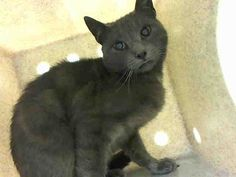 THIN MINT – A1033284 TO BE DESTROYED 4/25/15 - ***TO ADOPT THIS ANIMAL THROUGH THE PUBLIC ADOPTION SITE, PLEASE GO TO THE FOLLOWING LINK AND SCROLL DOWN TO BOTTOM TO LOG IN AND RESERVE THE ANIMAL. THERE WILL BE A $50 DEPOSIT REQUIRED. THIS OPTION IS AVAILABLE UNTIL 12PM TOMORROW. http://www.nycacc.org/PublicAtRisk.htm ***  ALL LOCATIONS:  For more information on adopting from the NYC AC&C, or to find a rescue to assist, please read the following…
