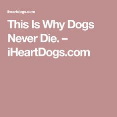 This Is Why Dogs Never Die. – iHeartDogs.com