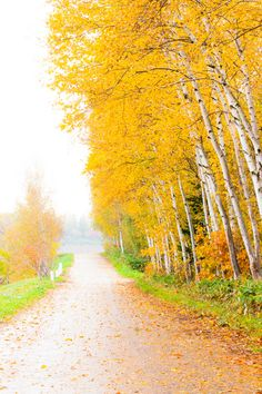 Promenade of autumn - Biei, Hokkaido, Japan