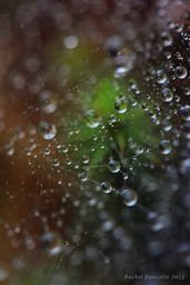 Dew Droplet Suspension