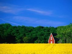 Photographic Print: Rape Field, Red House and Forest Poster by Anders Blomqvist : 24x18in
