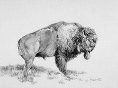 Buffalo Pencil Drawings Buffalo Pencil Drawing