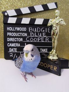 And the Oscar goes to…. Cooper!