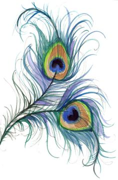 Peacock feathers drawing